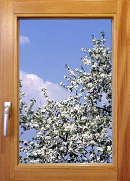 Fenster aus Holz Braunschweig